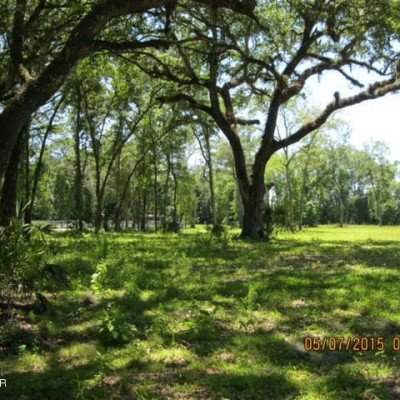 Shaded Horse Pasture with Live Oak Trees